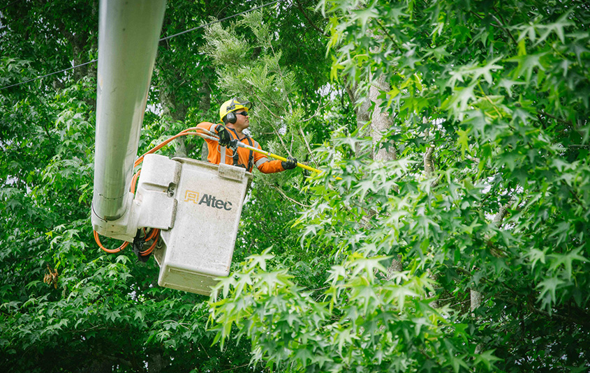 Fast Growing Arboriculture Industry Success Story
